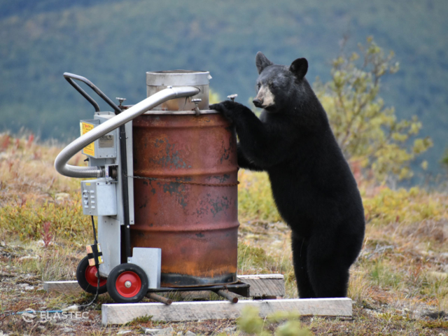 Baby bear with camp incinerator